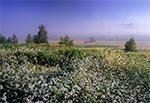 Roztoczańskie naturalne pola