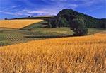 Dolina asymetryczna koło Kolonii Kondrackiej na Roztoczu Gorajskim