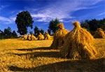 Tradycyjne roztoczańskie rolnictwo - Roztocze Zachodnie