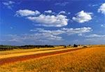 Pola na północ od Stanisławowa