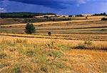 Pola Roztocza Zachodniego - okolice Gilowa