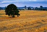 Lato w dolinie środkowej Tanwi (okolice wsi Pisklaki)