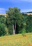 Lato na Roztoczu Zachodnim - okolice wsi Gilowem a Kondratami