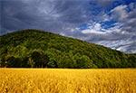 Góra Łysiec koło Hoszni Ordynackiej