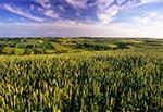 Pola wsi Sochy - widok z grzbietu Bukowej Góry