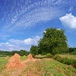 Między Wolą Radzięcką a Smoryniem na Roztoczu Zachodnim można latem wciąż zobaczyć tradycyjne snopki (zdjęcie z roku 2020), (wielkość oryginalnego pliku - 76 mln pix.)