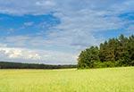 Panorama Wielkiego Działu od strony nieistniejącej wsi Manczury, za Starą Hutą. Na polu zaczyna dojrzewać owies. To zdaje się najlepszy widok na Wielki Dział, zwłaszcza w pełni lata. Chyba z godzinę czekałem aż powstanie taki układ chmur gdy słońce oświetli pole i las po bokach, a jednocześnie Wielki Dział będzie w cieniu. Ale czekanie się nie dłużyło, bo w tym czasie potrasiłem na ognisku strawę, przy okazji odstraszając dymem komary