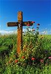 Przydrożny krzyż na południe od Zwódnego - Borek Białowolski