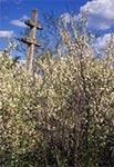 Przydrożny krzyż na północ od Szczebrzeszyna