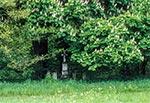 Krzyż z roku 1902, w nieistniejącym przysiółki w rejonie Werchraty - Zające