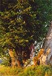 Bruśnieński krzyż przydrożny w Rebizantach o świcie