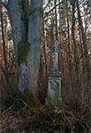 Przydrożny krzyż w nieistniejącej wsi Młodowce z 1905 roku