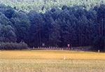 Krzyż z roku 1981 przy dawnej drodze z Werchraty do Horyńca, dziś droga ma inny przebieg