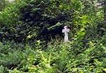 Przydrożny krzyż z płaskorzeźbą św. Mikołaja (nie widoczną na zdjęciu, bo zasłania roślinność), w nieistniejącej wsi Gruszka