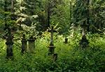 Zabytkowy cmentarz z kamieniarką bruśnieńską
