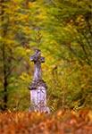 Na leśnym cmentarzu w Teniatyskach