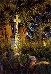 Na cmentarzu w Nowym Bruśnie