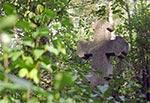 Tak kiedyś wyglądał cmentarz w Łosińcu - zdjęcie archiwalne