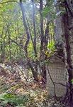 Tak kiedyś wyglądała wschodnia część cmentarza w Łosińcu