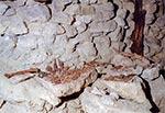 Zimą roku 2017 członkowie Stowarzyszenia Speleoklub Beskidzki odkryli w jednej ze sztolni szczątki ludzkie, prawdopodobnie pochodzące z II Wojny Światowej