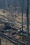 Schron bojowy linii Mołotowa - Góra Brusno