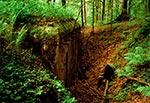 Czerwiec to najtrudniejszy miesiąc do szukania ukrytych w zielsku schronów. Do tego ryzyko załapania kleszcza jest maksymalne. Za to satysfakcja wypatrzenia bunkra największa