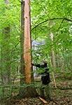 Efekt trafienia w drzewo przez piorun