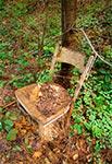Krzesło Dziada Borowego - Roztocze Wschodnie