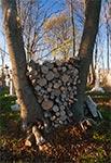 Ciekawy sposób na składowanie drewna - cmentarz w Wierzbicy