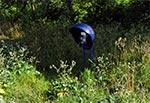 Kiedyś we wsi Wychody stała taka budka telefoniczna, do której zdaje się nikt nie chodził, bo zarosła bodziakami, aż w końcu ją zdemontowano. Ale bodziaki były, są i zapewne długo jeszcze będą ;-)