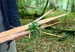 Efekt uderzenia pioruna w drzewo - Roztoczański Park Narodowy