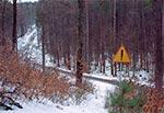 To zdaje się jedyne na Roztoczu zjawisko, gdzie ledwo czytelna w terenie droga leśna została zaszczycona takim pięknym, pełno prawnym znakiem drogowym. Jesteśmy na stoku Długiego Goraja