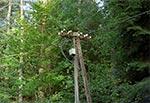 Stare słupy telegraficzne przy drodze do Obroczy z Kosobud