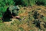 W okolicy wsi Prusie znaleźliśmy taki oto zamaskowany dół, a na wierzchu zakrętka do słoika z jakąś cieczą wabiącą. Najwyraźniej była to pułapka kłusownika zastawiona na dzika