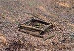 Jedna z czterech studni we wsi Gruszka i w jej przysiółkach, która to wioska obecnie jest już całkowicie wymarła. Pozostały kupki kamieni po fundamentach domów i owe studnie. Do niedawna mieszkał tam jeden człowiek i ta studnia to właśnie ta, w wąwozie przy jedynym współczesnym gospodarstwie - przedwojenna. Druga nowsza obok jest już betonowa. Tutaj uwaga! Podchodząc do tej studni miejmy się na baczności, bo zbutwiałe ogrodzenie jest nieco przesunięte w stosunku do obrysu studni. Stając tam po prawej (na zdjeciu), może nam noga trafić w próźnię, bo liście to dodatkowo maskują więc grozi nam tam skok z dwudziestu metrów do wody o nieznanej głębokości. Zauważmy jeszcze, że po prawej w głębi ściana studni jest wyraźnie nierówna i wybrzuszona, co świadczy o postępującej destrukcji. Prędzej czy później dojdzie więc tam do oberwania się części ściany