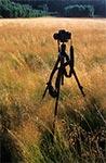 Plener fotograficzny - polana w Roztoczańskim Parku Narodowym