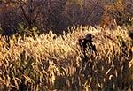 Plener fotograficzny - jesienne trawy na Roztoczu Szczebrzeszyńskim