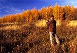 Jesienny plener fotograficzny - modrzewie w okolicy kol. Gorajec-Zagroble