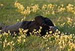 Na łąkach na SW od Zamościa rosły takie oto łany pierwiosnków, które fotografuje Marek. W roku 2017 temat został zaorany dosłownie i w przenosni. Zdjęcie z pleneru towarzyskiego z Wiesławem Lipcem, który jest autorem zdjecia