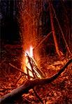 Zimowe ognisko w bagiennych ostępach leśnych