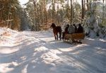 Przejażdżka saniami przez Roztoczański Park Narodowy - Trakt Florianiecki