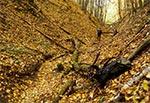 W wąwozach Roztocza Wschodniego / Południowego jesienią