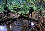 Naturalny mostek na potoku Świerszcz