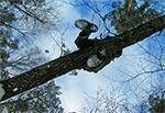 Pokonywanie wąwozu górą - po moście drzewnym ;-)