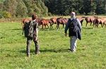 Dziś trudno wyobrazić sobie, że na północ od Niwek Horynieckich były takie błogie pastwiska i stada koni. Dlaczego? - Ano obecnie chaszcze tam są wyższe od wierzchowca. (Zdjęcie z 18 wrześnbia 2004 roku).