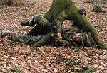 Uważajmy na roztoczańskie drzewa - potrafią zaatakować, obalić i opleść korzeniami nieboraka