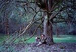 Znalezienie poroża (leży na plecaku) to niewątpliwie szczęście ale to szczęście ma niestety swoją masę, która dodatkowo obciąża zwykle i tak przeciążony plecak. Jest to więc taki przypadek kiedy zachodzi nieszczęście w szczęściu ;) To ciekawe drzewo znajdziemy między Łowczą a Brusnem Nowym przy linii wysokiego napięcia