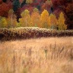 Jesienne klimaty Roztocza Środkowego - między Szewnią Górną a Suchowolą