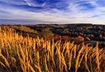 Dzikie trawy na Roztoczu Zachodnim