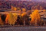 Roztocze Gorajskie w pełni jesieni - okolice Gilowa